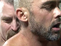 Two hot mature gay bears fuck doggy style